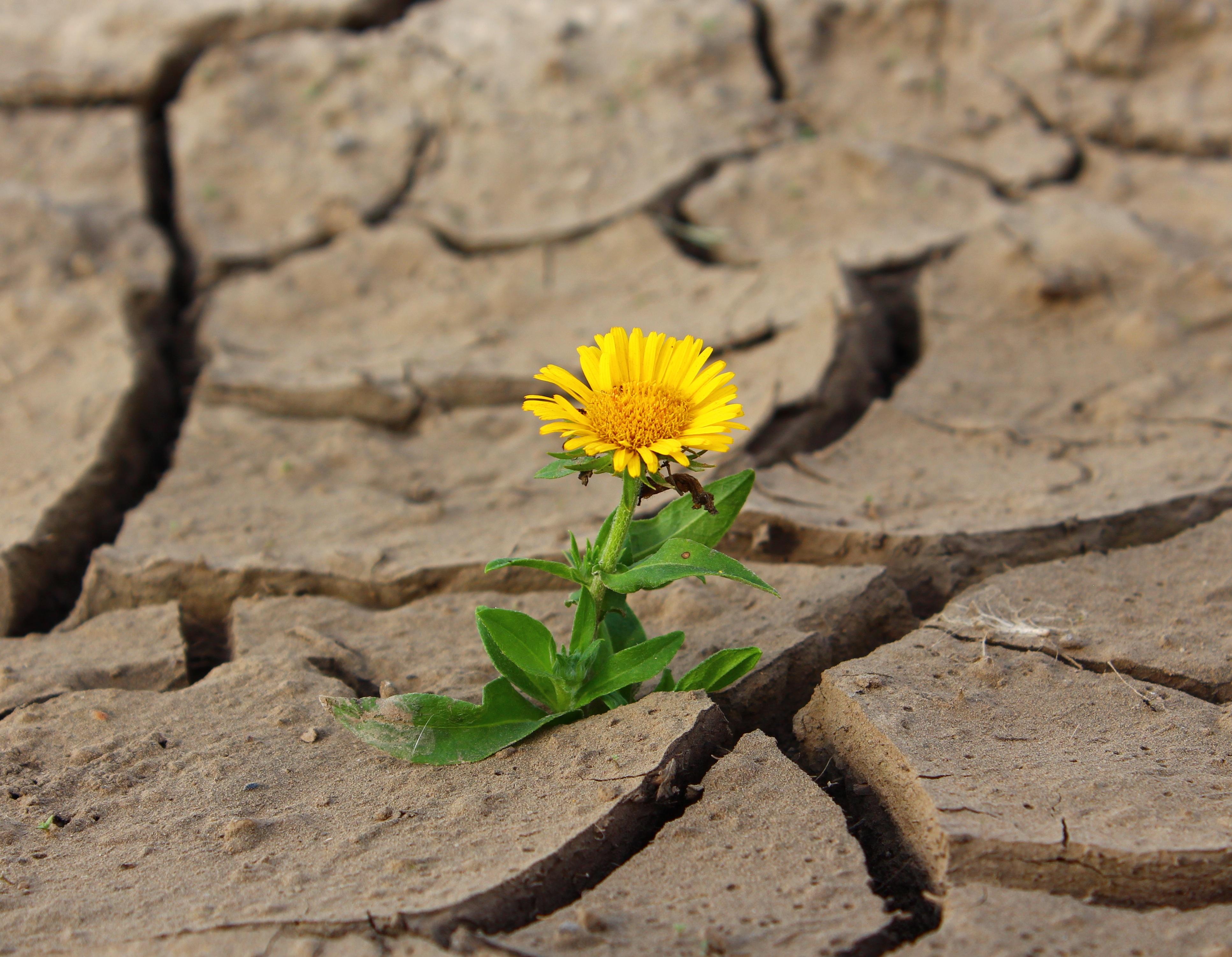 Adversidad, Superación, Crecimiento